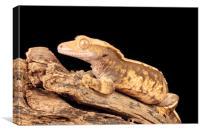 Golden Lizard on Driftwood, Canvas Print