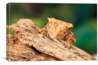 Lizard peeking over a piece of driftwood, Canvas Print