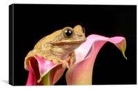Cute little frog on a pink Lily flower, Canvas Print