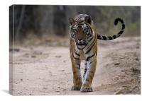 Tiger, tail, swish, Canvas Print