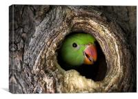 Parrot, hidden, tree, Canvas Print