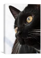 Cat, eye, macro, Canvas Print