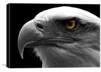 Bald Eagle, macro, eye, digital, Canvas Print