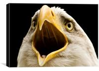 Bald Eagle, beak, macro, Canvas Print