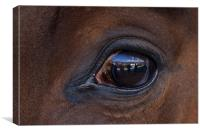 Horse, reflection, macro, Canvas Print