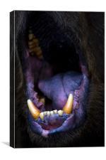 bear, mouth, roar, Canvas Print