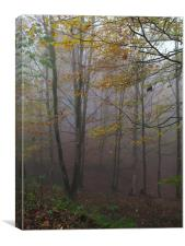 Fog in Forest, Canvas Print