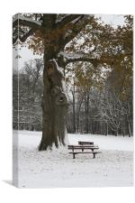 A Tree and Two Seats, Canvas Print