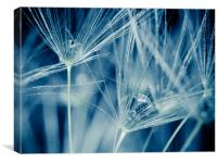 Dandelion seed closeup, Canvas Print