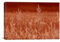 Rustic Field, Canvas Print