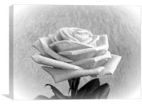 White Rose Marble., Canvas Print