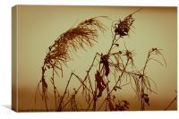 Winter Plants, Canvas Print