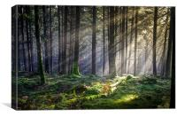 Dunkeld Forest light..., Canvas Print