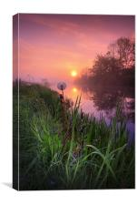Dandelion sunrise..., Canvas Print