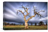 Skeleton Tree, Fintry..., Canvas Print