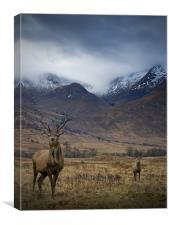 Sron na Creise from Glen Etive, Canvas Print