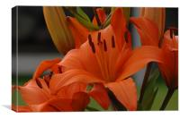 Lilies to touch