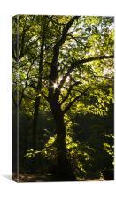 Tree Fairies, Canvas Print