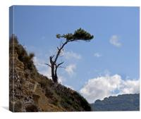 Clifftop Tree - sorrento, Canvas Print