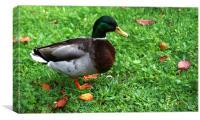 Quack, Canvas Print