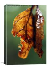Weathered Leaves, Canvas Print