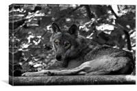 The Moody Wolf, Canvas Print