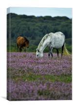 Double Ponies, Canvas Print