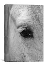 Window to the Soul, Canvas Print