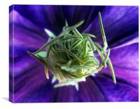 The heart of the Clematis, Canvas Print