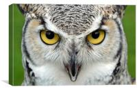 Canadian Great Horned - Face, Canvas Print