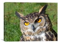Makinders Eagle Owl, Canvas Print