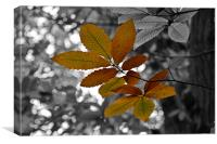 Hint of Autumn, Canvas Print