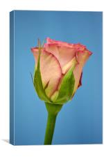 Rose - Hypnose, Canvas Print