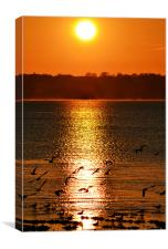 Glowing sunset and gulls, Canvas Print
