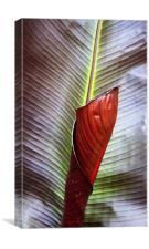 New Leaf, Canvas Print