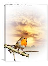 Robin At Sunset, Canvas Print