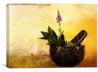 Herbs, Canvas Print