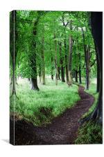 Tree Walk, Canvas Print