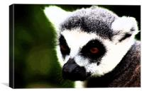Ring Tailed Lemur, Canvas Print