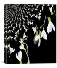 Snowdrop Fractal, Canvas Print