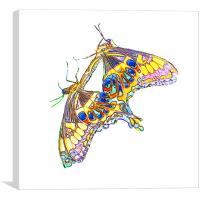 Butterflies, Canvas Print