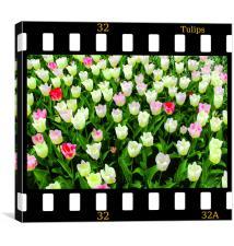 Tulips On Film, Canvas Print