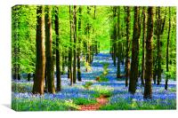 Bluebell Pathway, Canvas Print