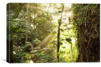 Woodland Sunlight, Canvas Print