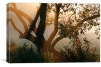 Sunrise Mist, Canvas Print
