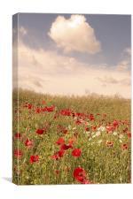 Poppy field, Eynsford, Kent, Canvas Print