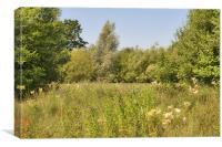 Midsummer Meadow, Canvas Print