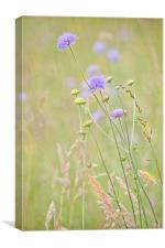 Flower Meadow, Canvas Print