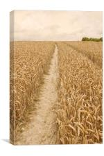 Vintage Wheat Field, Canvas Print