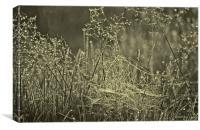Water droplets on Cobwebs, Canvas Print